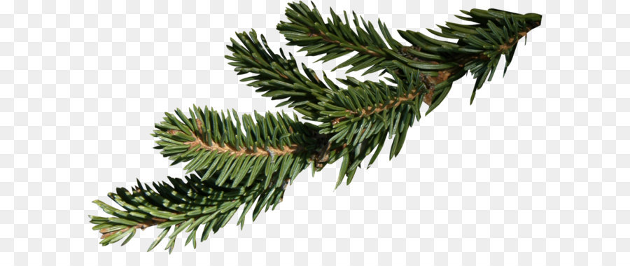 Christmas Branch Png.Family Tree Background