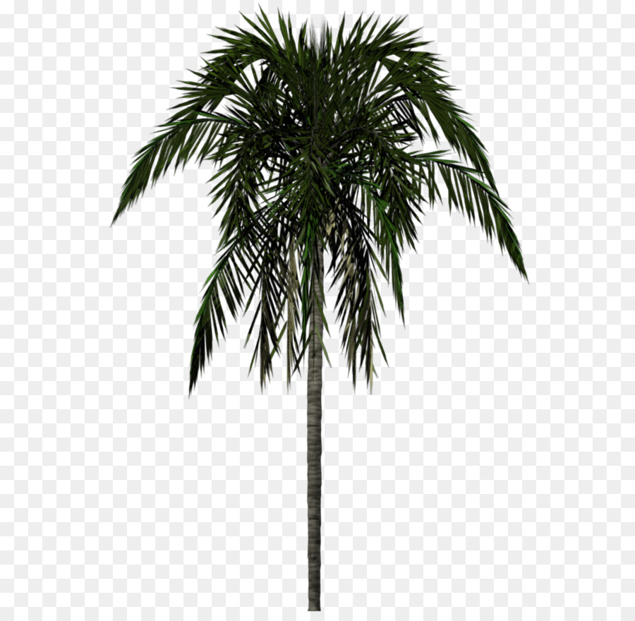Arecaceae Tree 3D modeling - Palm tree PNG