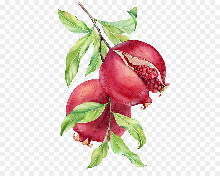 15  Best New Pomegranate Drawing Simple