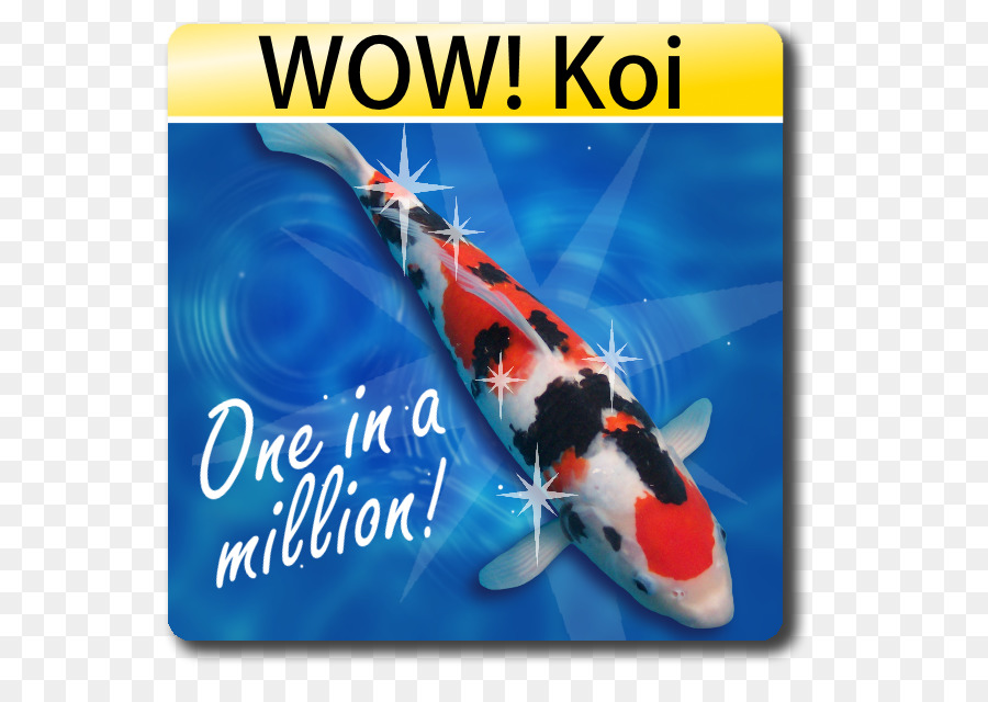 Butterfly Koi Tanchō Blackwater Creek Koi Farm Fish - Bickal