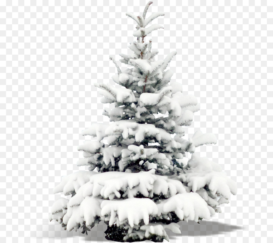 Portable Network Graphics Snow Tree Vector Graphics Image Snow Png